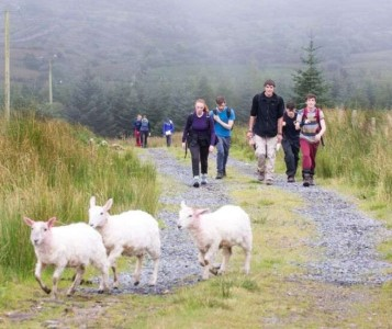 Walkers and Sheep on Hill